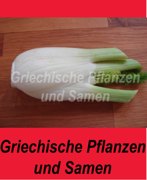 Griechischer Fenchel, Gemüse ? Fenchel, Feingemüse - Griechische ... Fenchel Pflanzen Tipps Pflege Gemuse