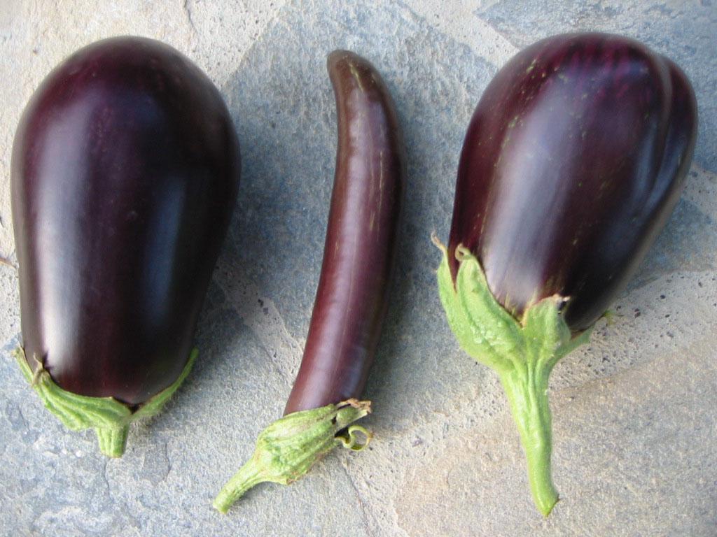 aubergine, rund und lang, 2 sorten, mediterrane küche