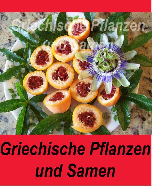 passiflora caerulea winterhart griechische pflanzen und. Black Bedroom Furniture Sets. Home Design Ideas