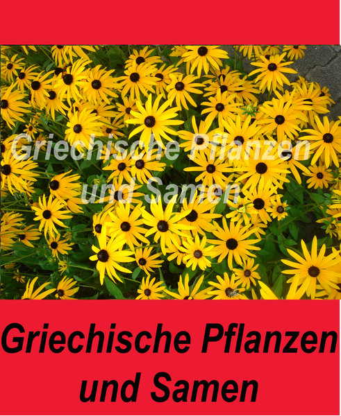 sonnenhut gelb rudbeckia hirta heilpflanze. Black Bedroom Furniture Sets. Home Design Ideas