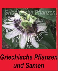 Passiflora Edulis purple Giant