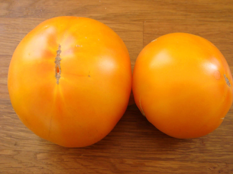 persimmon tomate russische fleisch tomaten gelb. Black Bedroom Furniture Sets. Home Design Ideas