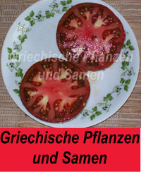 Amazon chocolate Tomate *** schwarze Tomaten ** Ukraine